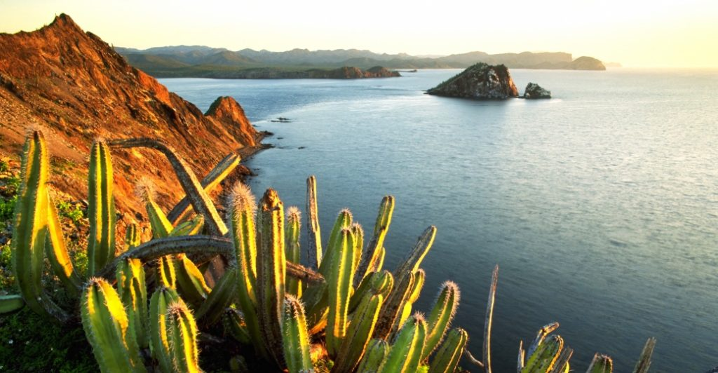 senita-cacti-growing-on-isla-datil-sonora-via-history-com