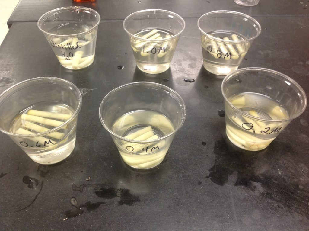 A potato Diffusion-Osmosis Lab Via: Daniel's AP Bio Blog