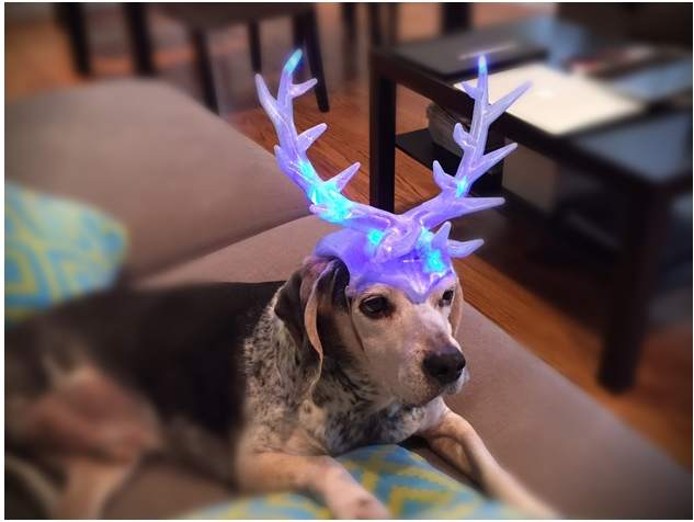 Rudolf the rein-dog. 3D printed antlers Photo via: Winbo.