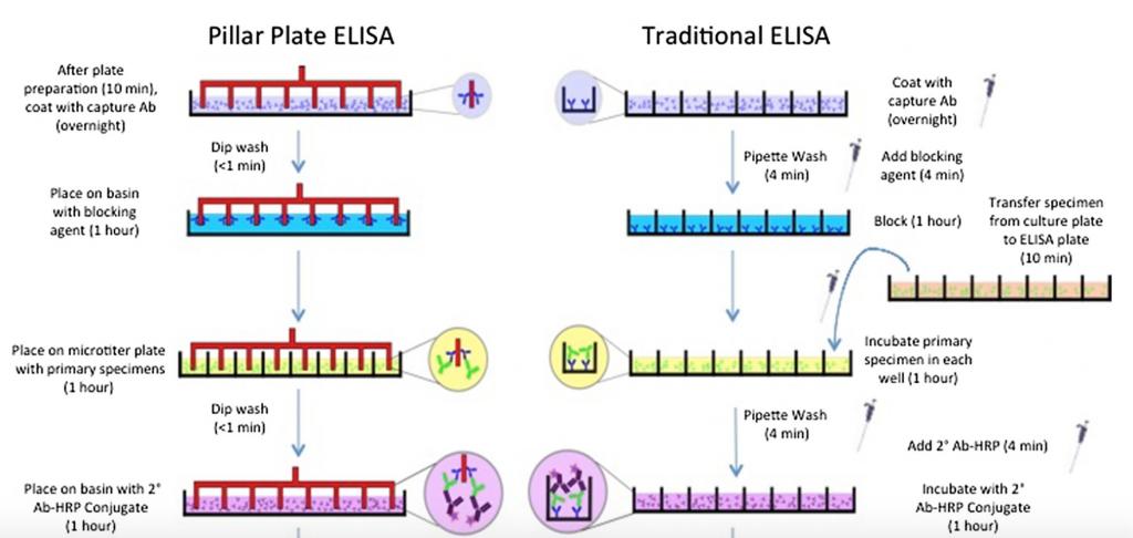 Comparative schematic of the ELISA process. Figure via: J.D. McCallen, A. Schaefer, P. Lee et al.