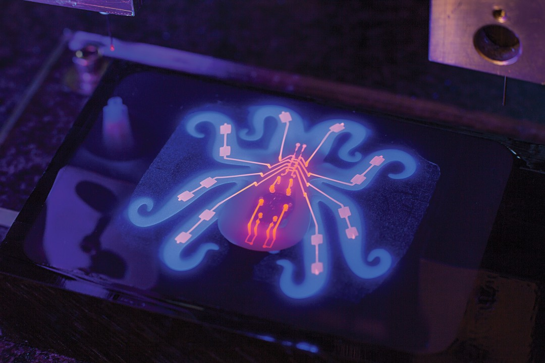 The Octobot being printed under back light. Image via MIT Technology Review.