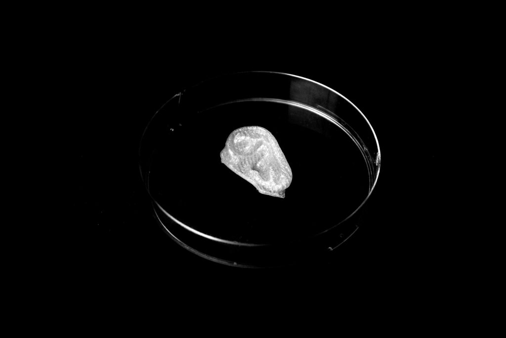 Nefertiti's ear 3D bioprinted on a Invivo from Rocket 3D. Photo via: Jonathan Beck of Scan the World in collaboration with iMakr medical