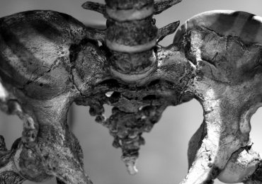 A human hip bone, one of the parts of the skeleton that Supercraft3D make implants for. Photo via: Oliver Braubach on Flickr
