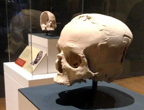 Interview with ThinkSee3D: behind the British Museum's Jericho Skull