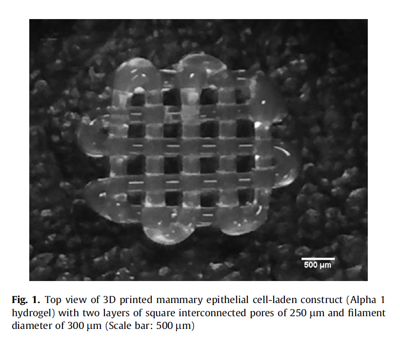3D printed peptide hydrogel lattice laced with mammary epithelial cells. Microscopic image via: Domingos et al.