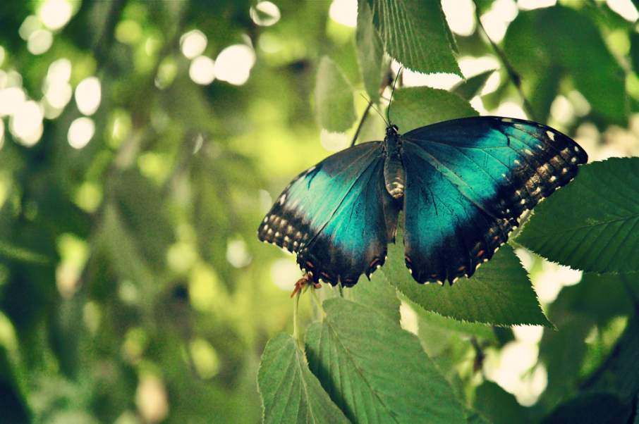 The iridescent wings of butterfly. Photo by Kathleen Dagostino, kathleencavalaro on Flickr