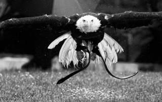 An eagle in flight by Oliver Schmidt, os2012 on Flickr