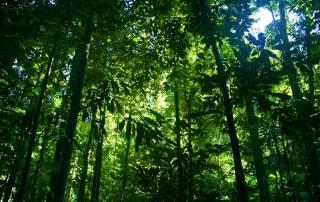 Green plants inside an Australian rainforest. Photo by Ben Britten, tauntingpanda on Flickr
