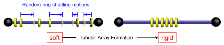 Arrangement of polyrotaxane molecule pre (left) and post (right) addition of water. Image by Chenfeng Ke, CC BY-ND