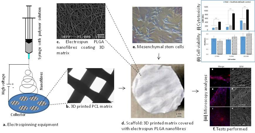 The process and results of combined 3D printing and electrospinning. Note: C & D - a 3D printed PCL/PLGA disc and its microscopic structure. Figure via Natasha Maurmann et al.