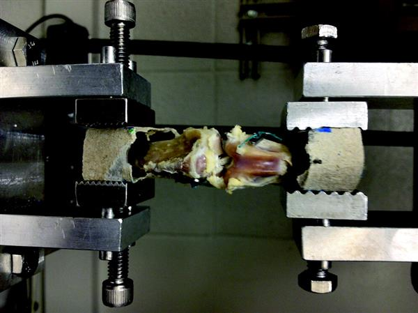 3D printed scaffolds undergoing testing. Photo via Tissue Engineering.