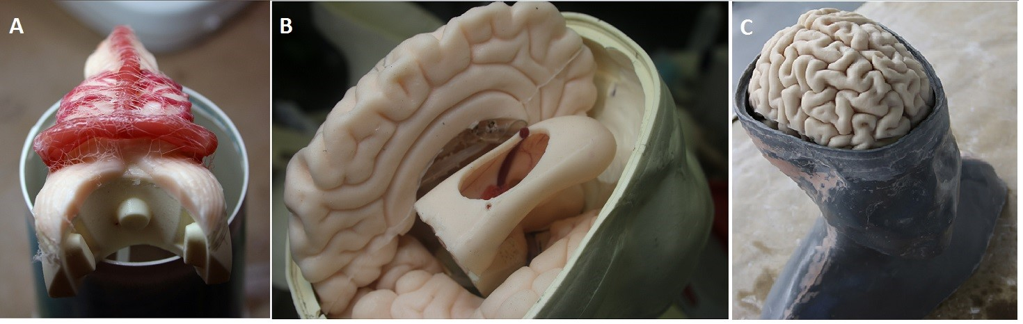 The insides of the 3D printed head. Image via the Journal of Neurosurgery.