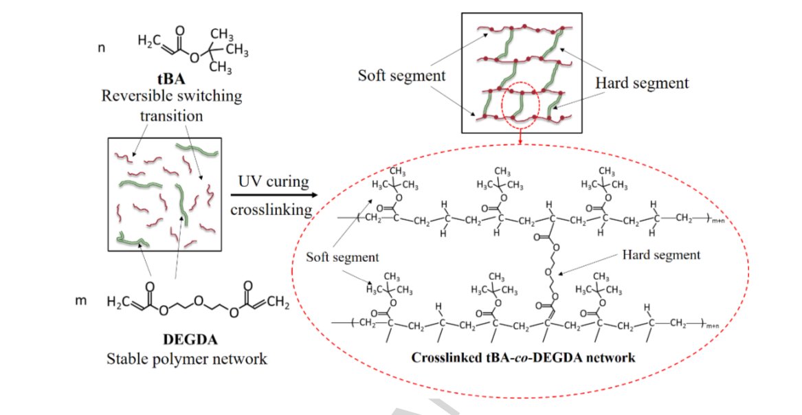 The tBA-co-DEGDA network of the photopolymer developed by the research team. Image via Materials & Design.