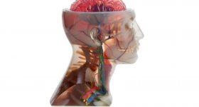 Anatomical head model 3D printed on the Stratasys J750. Photo via Stratasys