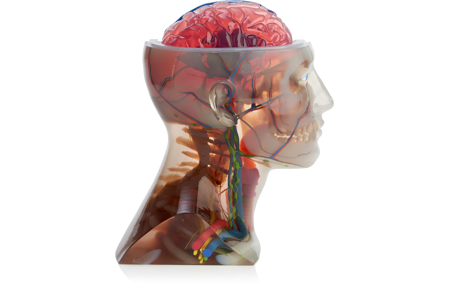 Anatomical head model 3D printed on the Stratasys J750. Photo via Stratasys