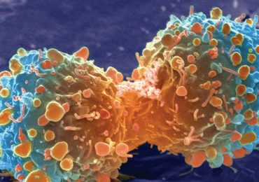 Cancer Cells Dividing, Biology, McDougal Littell, 2008