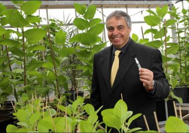 Professor Oded Shoseyov, founder of CollPlant Holdings Ltd. Photo via jewishbusinessnews