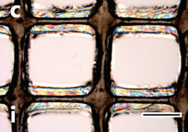Microscopic inspection of 3D printed cellulose nanocrystal ink. Image via Siqueira, Kokkinis, Libanori, Hausmann, Gladman, Neels, Tingaut, Zimmermann, Lewis and Studart