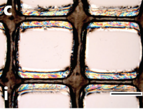 """3D printable nanocrystal ink from plant cellulose marks """"important step"""" toward sustainable materials"""