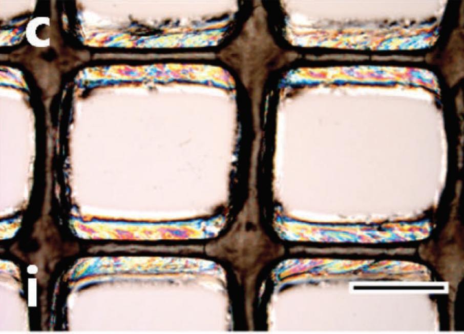 Microscopic inspection of 3D printed cellulose nanocrystal ink. Image via Siqueira, Kokkinis, Libanori, Hausmann, Gladman, Neels, Tingaut, Zimmermann, Lewis and Studart
