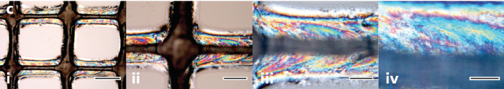 Rainbow iridescence reveals the structure of 3D printed cellulose nanocrystal inks. Image via Siqueira, Kokkinis, Libanori, Hausmann, Gladman, Neels, Tingaut, Zimmermann, Lewis and Studart