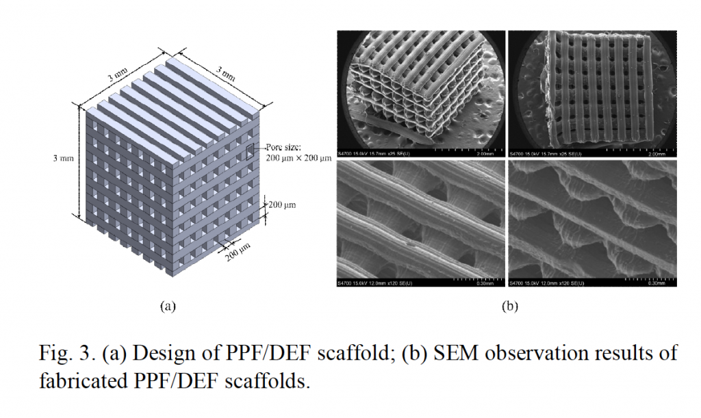 3D design of the cell scaffold (left) and scanning electron microscope (SEM) images of the 3D printed product. Image via Kim, Lee & Yun
