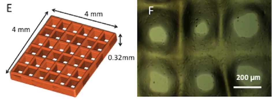 Left: 3D design of the bioprinted scaffold, right: the 3D bioprinted scaffold after culture. Image via Chawla, Kumar, Admane, Bandyopadhyay and Ghosha.