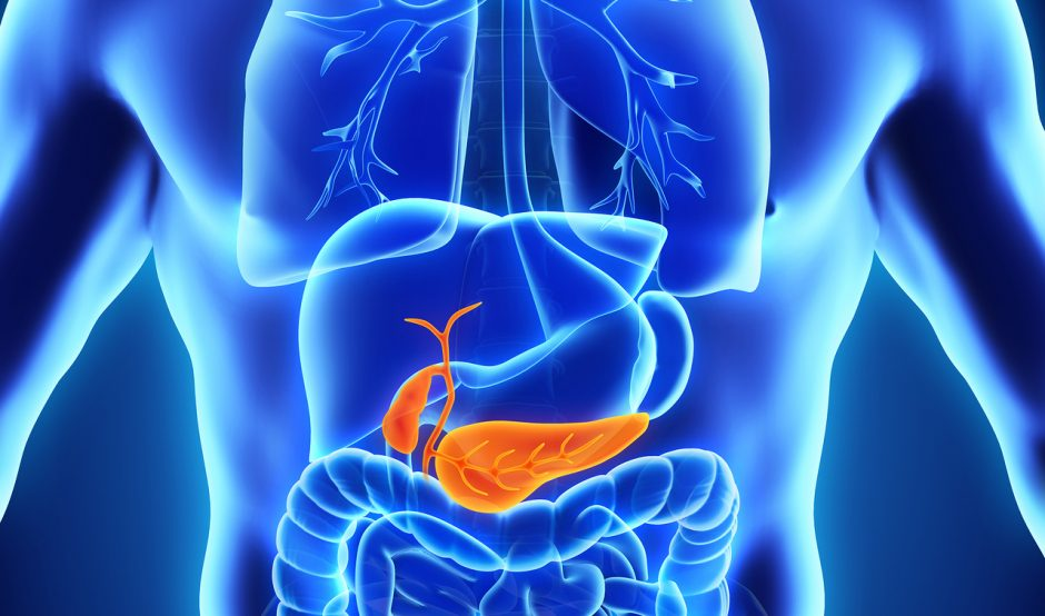 Binghampton University Looks To 3d Printed Pancreas For Type 1
