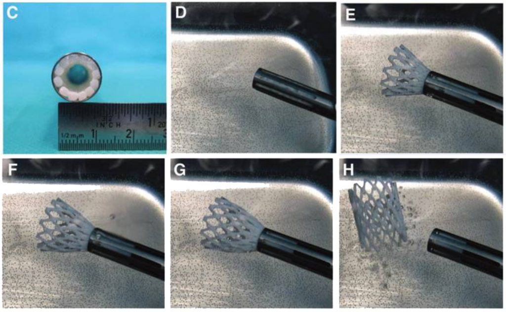 Step by step photos of the successful crimping test, showing autonomous expansion. Image via Cabrera Sanders, Goor, Driessen-Mol, Oomens, & Baaijens