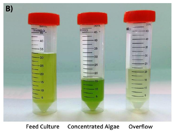 Left to right: algae water mixture as fed into the hydrocyclone, concentrated algae delivered at the base outlet of the device, and the more water-concentrated overflow from the top of the device. Image via Syed, Rafeie, Henderson, Vandamme, Asadnia & Warkiani