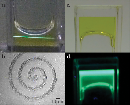 Polymerization test of the photoinitator on a nanoscale. Image via Nano Letters