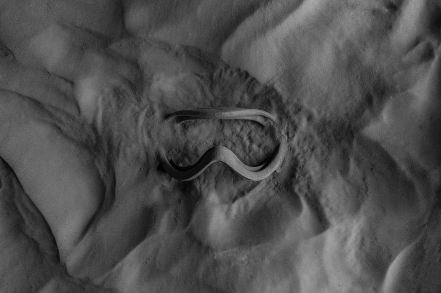 Ski goggles SLS 3D printed on the Fuse 1 and still in the powder bed. Photo via Formlabs