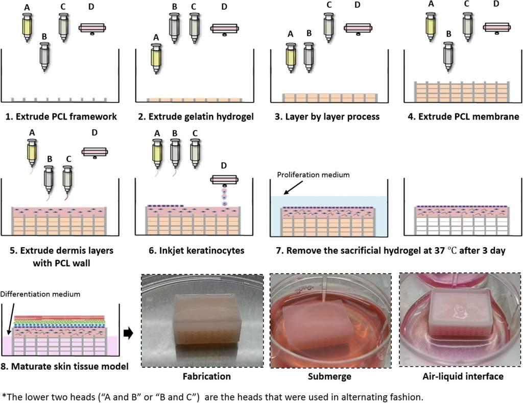 POSTECH skin 3D bioprinting process. Image via Kim, Lee, Gao & Cho