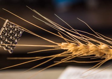 The record-breaking 3D printed graphene aerogel defies an ear of wheat in a demonstration of its lightweight density. Photo by Kansas State University