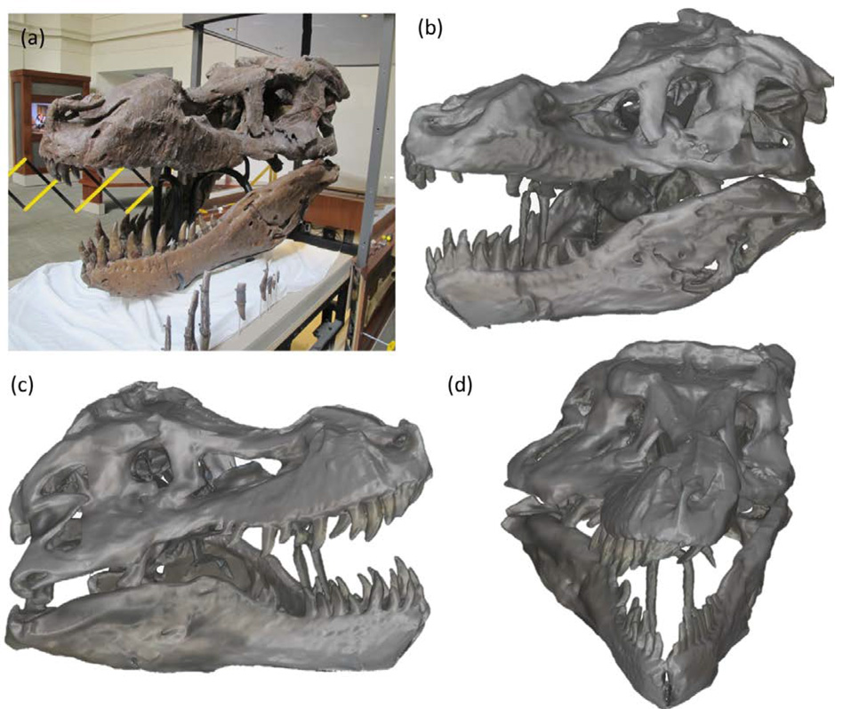 (a) photograph of the T.rex skull and images of the 360 degrees scan. Image via PLOS ONE.
