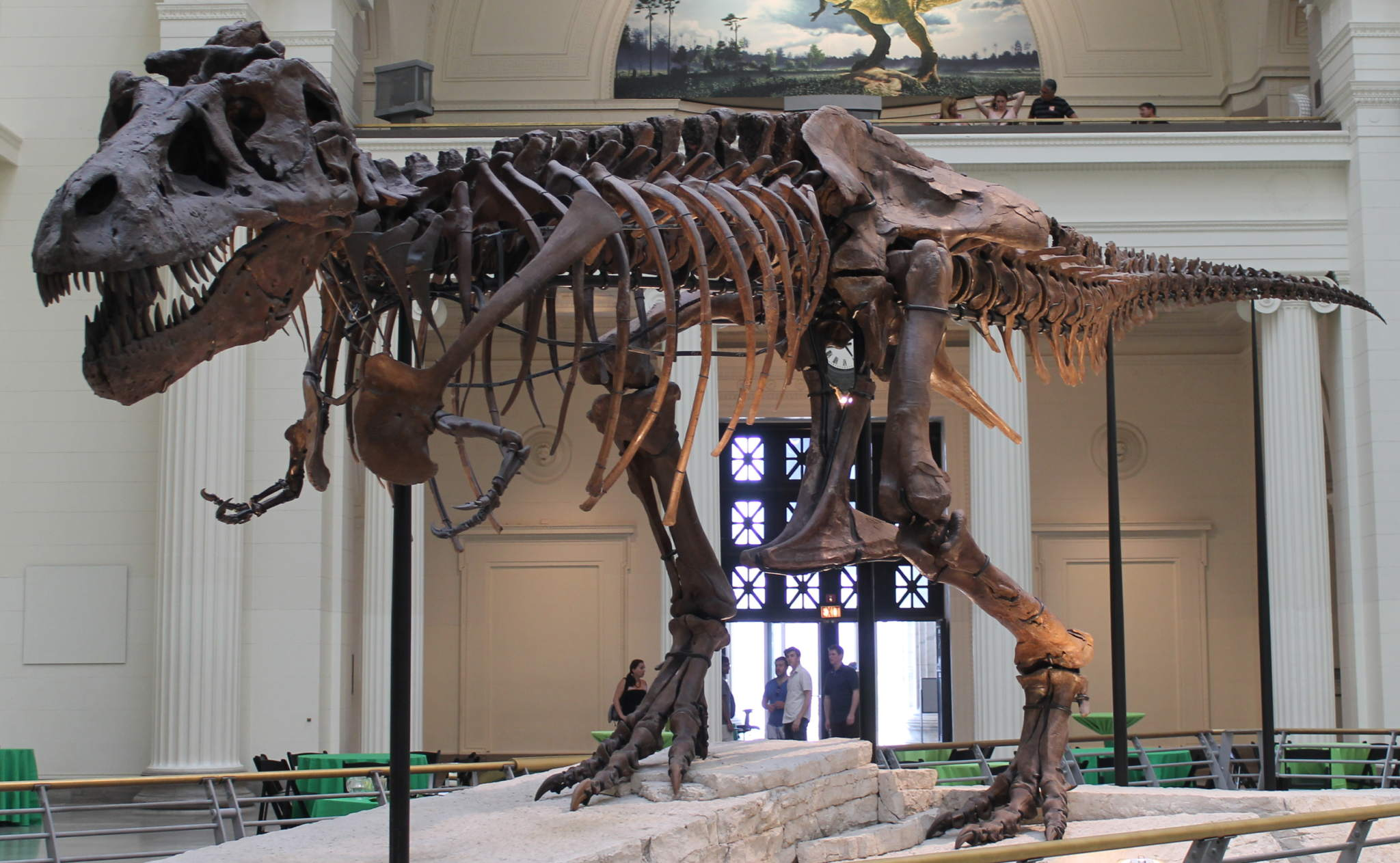 Sue the T. rex on display in Chicago. Photo by Connie Ma via Wiki Commons.
