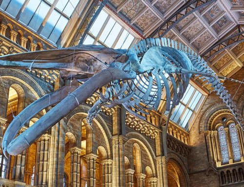 Natural History Museum's Hope the Whale has 3D printing in its bones