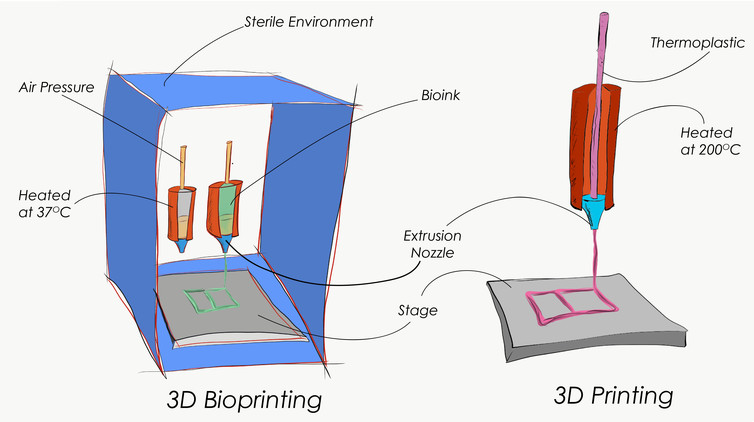 3D bioprinting vs regular 3D printing. Image by Steffen Harr