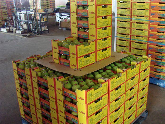 A cargo of packaged mangoes. Photo via Mango World Magazine.