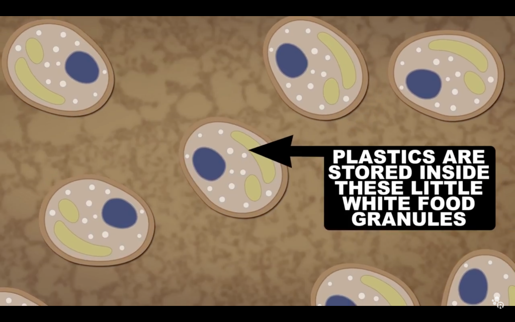 "Screengrab of a graphic describing Y. lipolytica makeup from ""The Spacefaring Power of Pee"" by Reactions on YouTube"