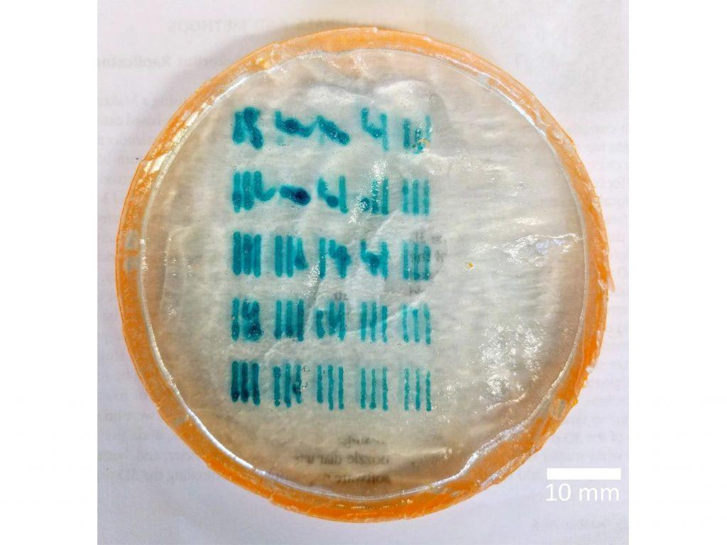 3D printed calibration test of the Krebs Lab hydrogel. Image via Huff, Osmond and Krebs
