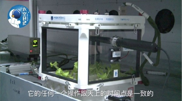Lettuce grown in a 3D printed environment on the Tiangong II space station. Image via China Daily
