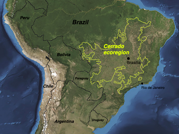 In Brazil, the Cerrado region is second only to the Amazon in size, accounting for 21 percent of the country's land area. Cerrado boundary image by Undark.org