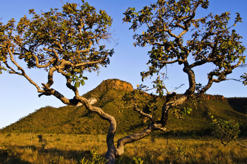 Embrapa To Test Biological Activity Of Cerrado Plants With