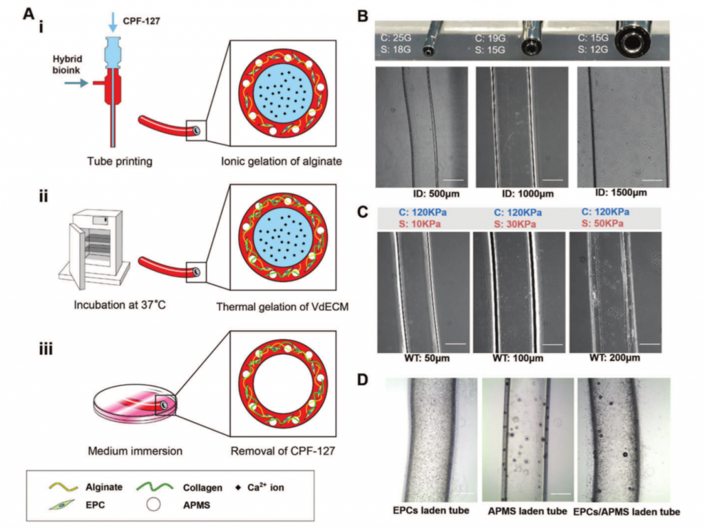 Fabrication of the 3D printed bio blood vessel and results. Image via Wiley.