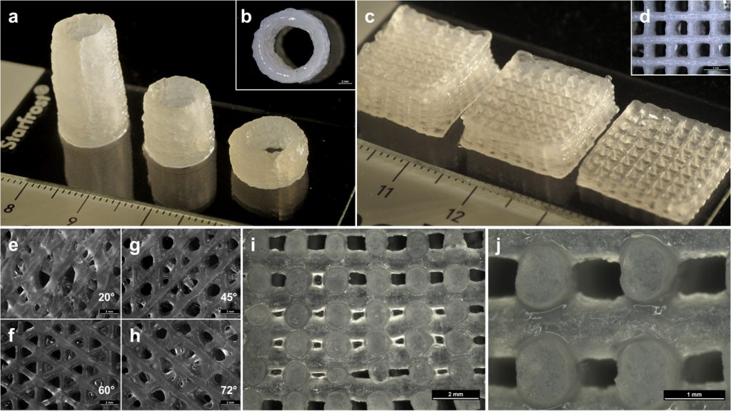 3D printed Laponite hydrogel cell scaffolds and cylinders. Image via Biofabrication journal