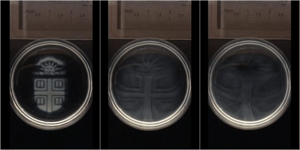 Stages of degradation. In this example, a 3D printed Brown University crest dissolves in 15 minutes when a chelating agent is added. Images via Brown News