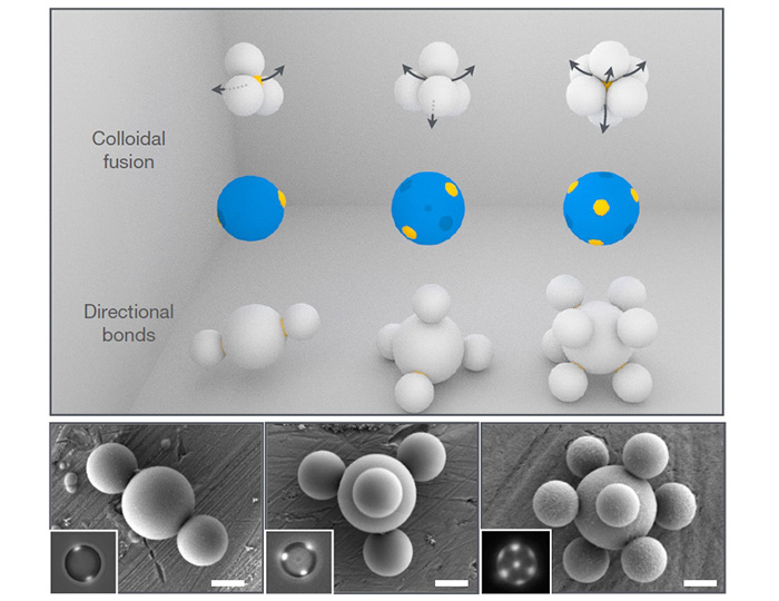 "Step by step process of colloidal fusion - ""patches particles"" connect via liquid bonds contained inside. Image via Nature Letters"
