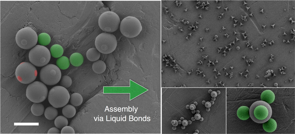 Patchy particles with liquid nodules (marked green) merge to form 3D shapes. Image via Nature Letters