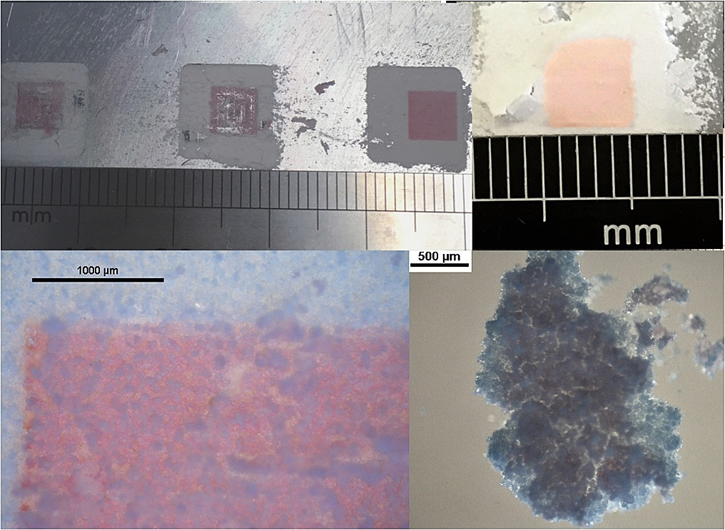 Cellulose samples fabricated in the University of Nottingham study. Image via Journal of Food Engineering
